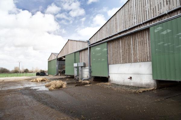 Stabulation bovins à Groffliers